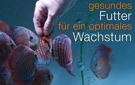 Diskusfisch-Futter_online_kaufen_EuropaDiscusCenter