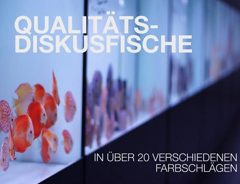 Diskusfische_online_kaufen_EuropaDiscusCenter