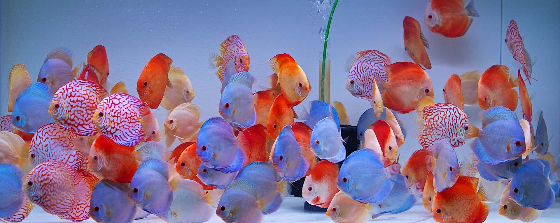 EuropaDiscusCenter Diskusfische