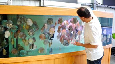 3000 Liter Diskus-Aquarium