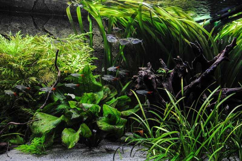 Stefan Bartosch Diskusfische Aquarium