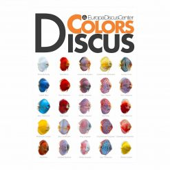 Diskus-Poster 2019 EuropaDiscusCenter