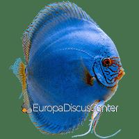 Kobalt Blau Diskus