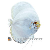 White Butterfly Diskus